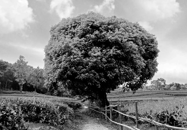tree-647x450